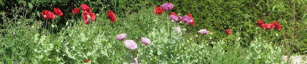 landscape gardening Warwckshire